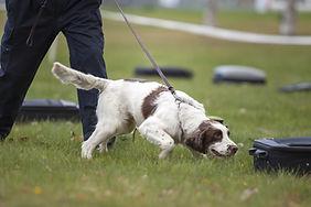 Training a dog.jpg