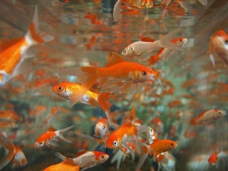 FeederFish1.jpg