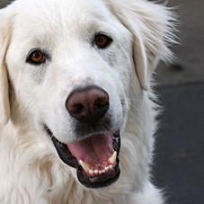 Podcast Episode: Help! My dog just bit someone!