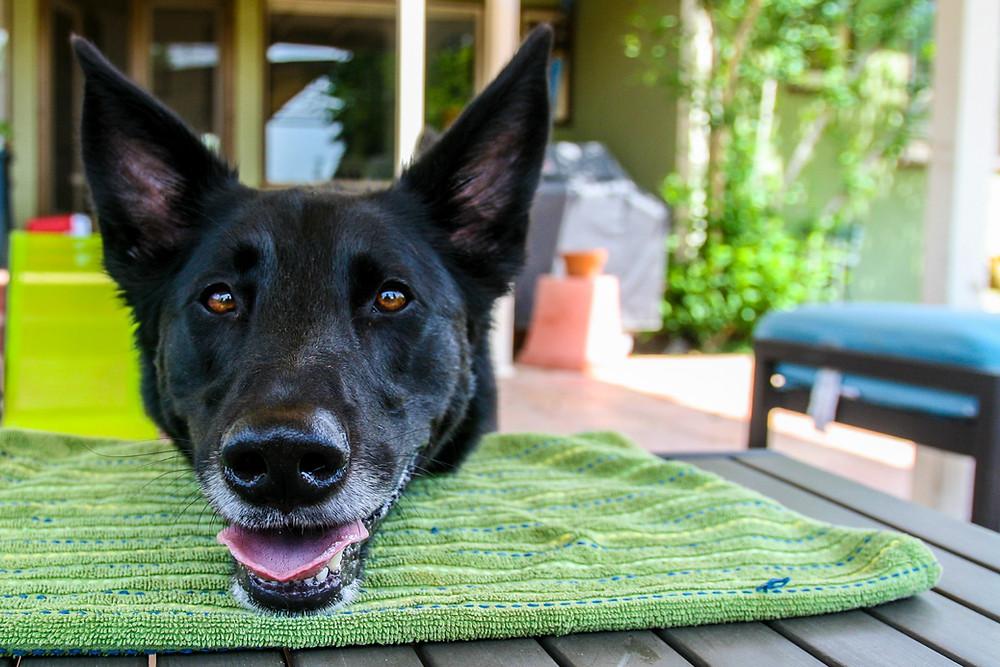 Clicker dog training chin rest