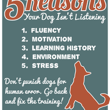 5 REASONS YOUR DOG ISN'T LISTENING
