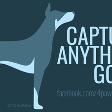 CAPTURE ANYTHING GOOD