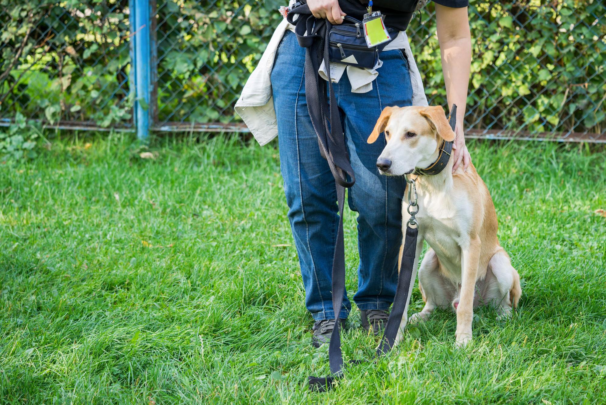 PREDATORY BEHAVIOR IN DOGS