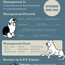 MANAGE YOUR DOG'S ENVIRONMENT FOR BETTER BEHAVIOR