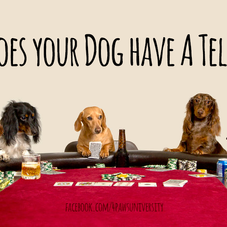 DOES YOUR DOG HAVE A TELL?