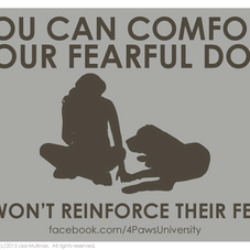SHOULD YOU COMFORT YOUR FEARFUL DOG?