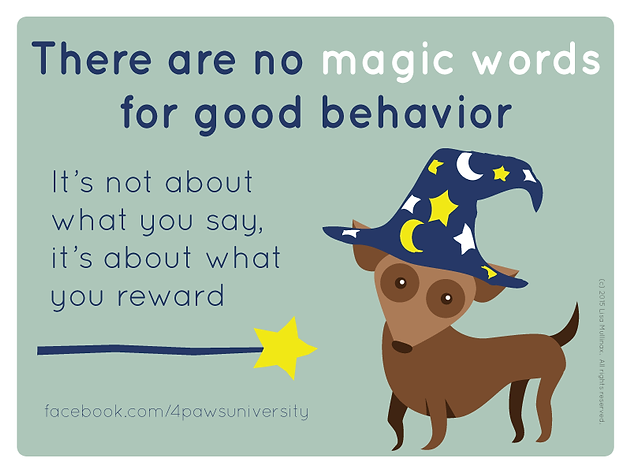 NO MAGIC WORDS IN DOG TRAINING