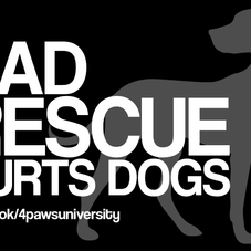 BAD RESCUE HURTS DOGS