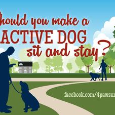 SHOULD YOU MAKE A REACTIVE DOG SIT & STAY?