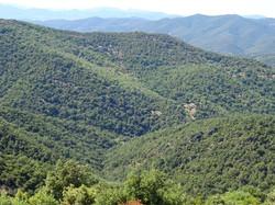 Le Col du Babaou (Collobrières)
