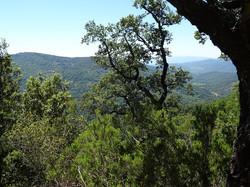 Collines_intérieures_arbres
