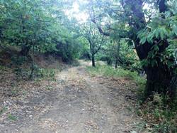 Chemin domaine de la Petite Odette