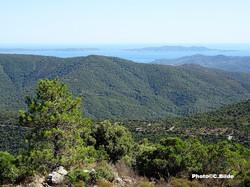 Vue mer des collines (Collobrières)