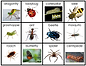 Bug Counting Activity