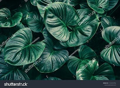 stock-photo-tropical-leaf-background-dar
