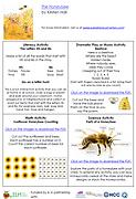 Screen Shot The Honeybee.png