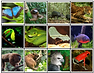 Screen Shot Rain Forest Animal Matching.
