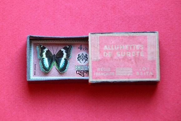 Boîte allumettes - papillon #8