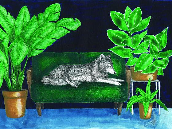 Loup sieste - Insight de Conquet