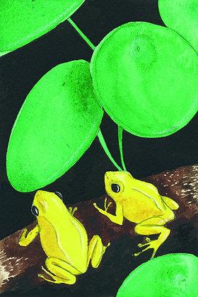 Grenouille citron - Insight de Conquet