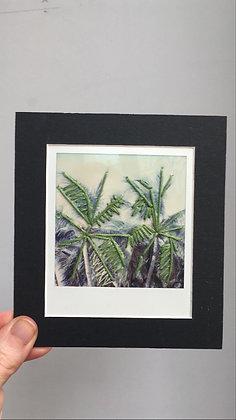 Polaroïd palm trees