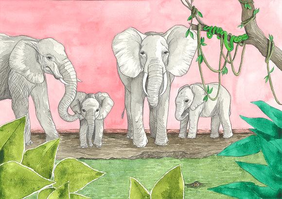 Elephants - Insight de Conquet