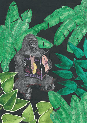 Gorille playboy - Insight de Conquet