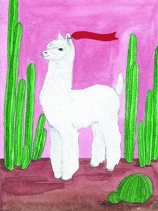 Cool lama - Insight de Conquet