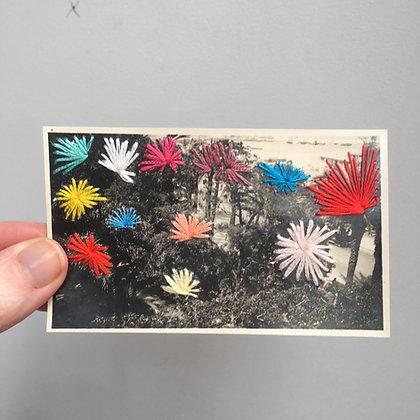 Photo palm trees #2