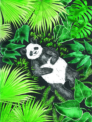 Panda jungle - Insight de Conquet