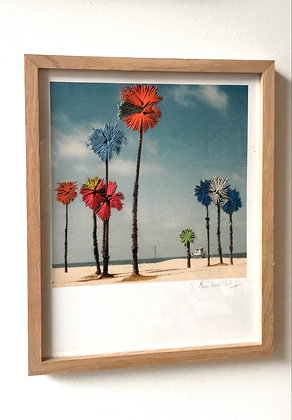 Palm trees, Santa Monica #1