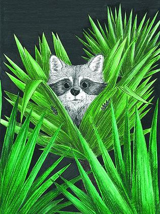 Raton jungle - Insight de Conquet
