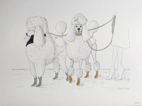 Poodles #3 Yellow Grey - édition / 30X40 cm - Insight de Conquet