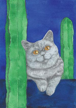 Blue cat - Insight de Conquet