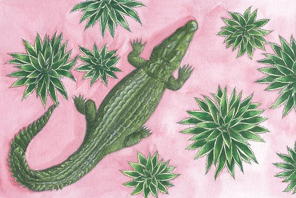Crocodile sieste - Insight de Conquet