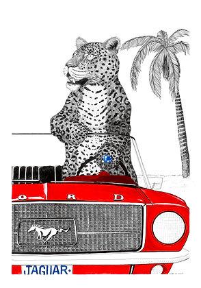 Jaguar Mustang - Insight de Conquet