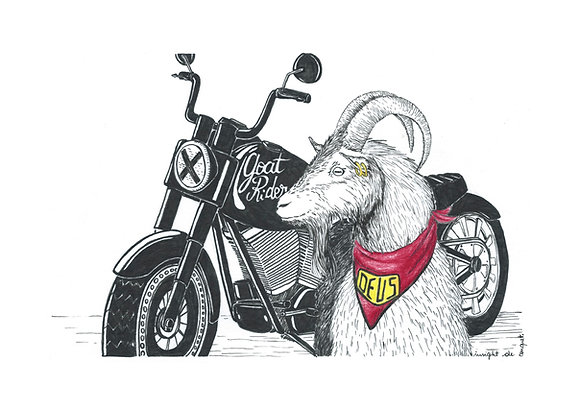 Goat Rider - Insight de Conquet