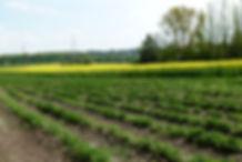 Erdbeeren selber pflücken in Bochum