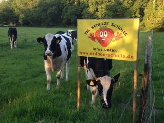 Erdbeerfeld in Neuenhaus am Abend