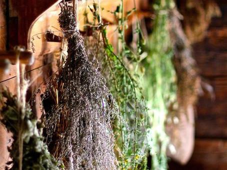 Comment bien faire sécher ses plantes ?