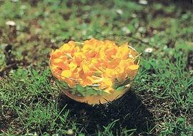 Solarisation de fleurs de Mimulus