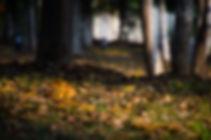 the-leaves-546028.jpg
