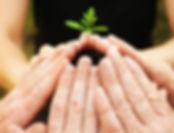 sapling.jpg