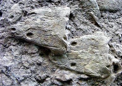 matopozaury czaszki.jpg