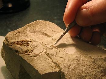 Fossil-preparation-spear-shaped-dental-t