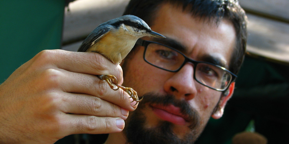 Bird Ringing Camps in Poland - Apply!