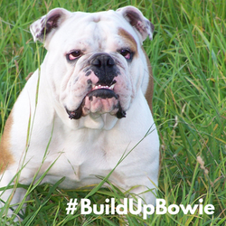 Build Up Bowie Campus Support