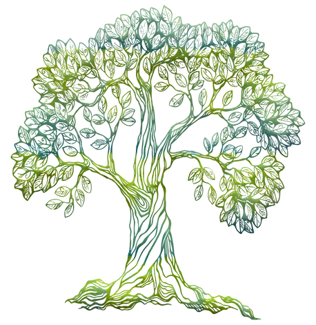 tree-5648364_1920.png