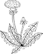 flower-31420.png
