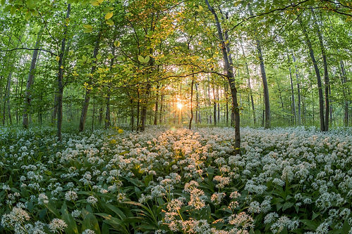 forest-811352_1920.jpg